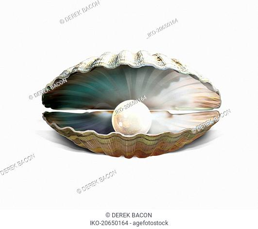 Pearl inside of oyster shell