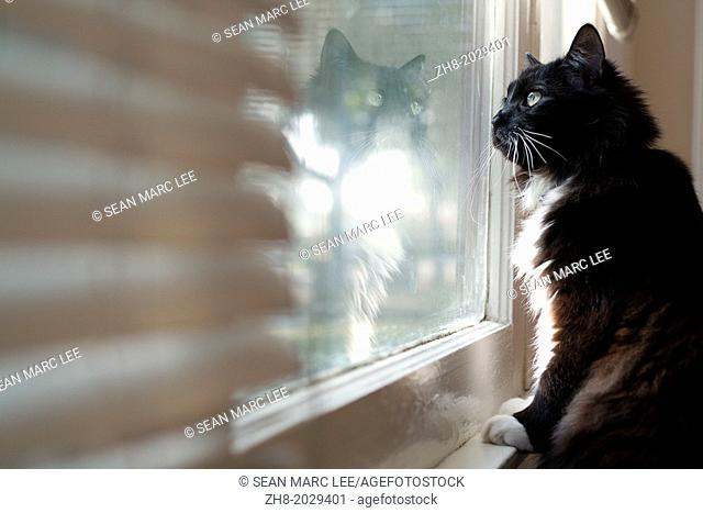 A black and white tuxedo cat stares out the window in thought