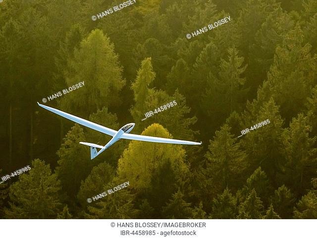 Glider, two-seater, Duo Discus D-5443 over autumn forest, near Arnsberg, Ruhr district, North Rhine-Westphalia, Germany