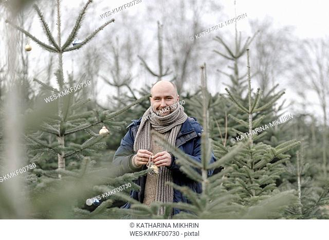 Portrait of smiling man decorating Christmas tree on a plantation