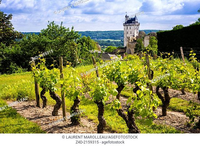 Vineyard and the Clock Tower of Chateau of Chinon. The Royal Fortress of Chinon is situated in the Centre Val de Loire region, overlooking the town