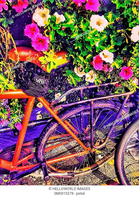 Bikes next to colourful flowers, Netherlands