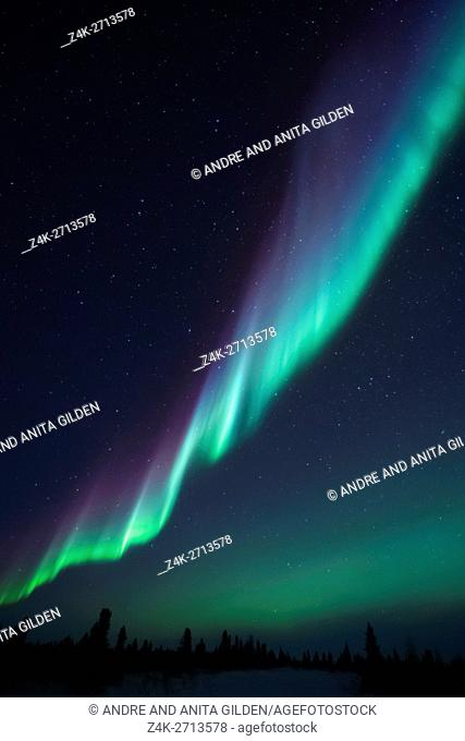 Nightsky lit up with aurora borealis, northern lights, wapusk national park, Manitoba, Canada