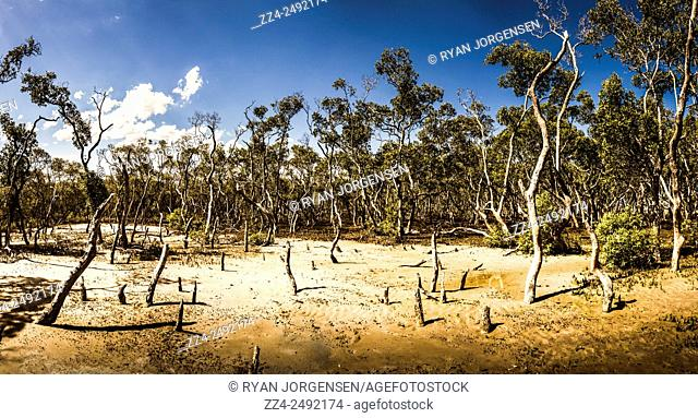 Four image landscape photo-stitch on a mangrove forestation deep in the swampland of Deception Bay Conservation Park, Queensland, Australia
