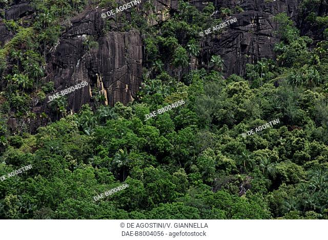 Rain forest and granite wall, Mahe island, Seychelles