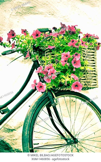 Rusty bicycle with flowers  Wicklow Mountains National Park  County Wicklow  Ireland