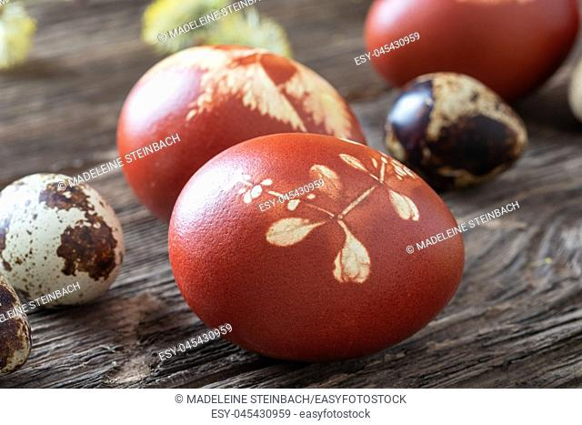 Easter eggs dyed with onion peels with a pattern of fresh herbs
