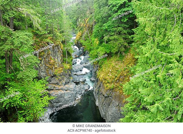 Englishman River and lush old-growth and second-growth forest Englishman River Falls Provincial Park British Columbia Canada