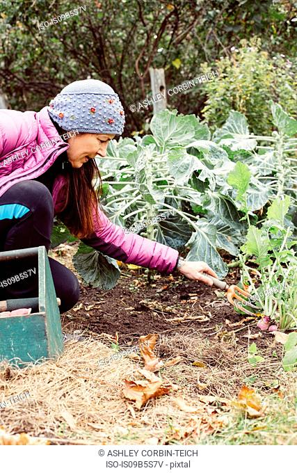 Woman using small garden fork to dig up vegetables in garden