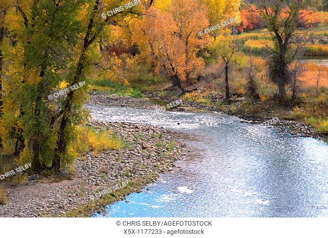 Fall colors along the Yampa River near Steamboat Springs, Colorado, USA