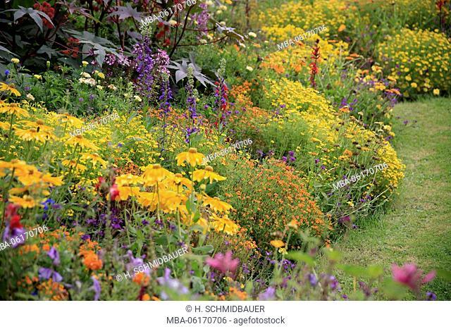 Flowers, plants, flower, flora