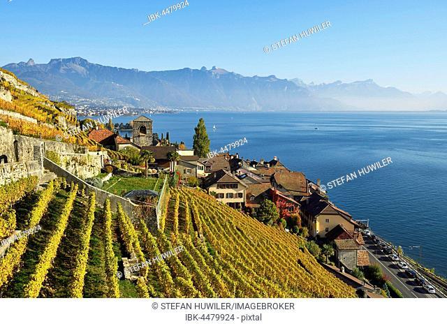 Vineyards in autumn, view of Lake Geneva and winegrowing village Saint-Saphorin, Lavaux, Canton of Vaud, Switzerland