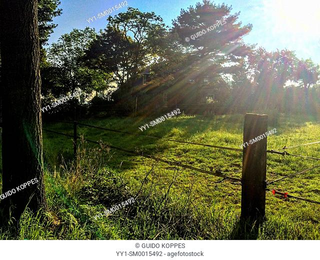 Tilburg, Netherlands. Agricultural meadow with farm and trees in early morning sunlight