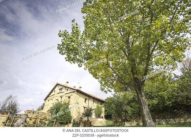 Autumn poplars in Alcala de la Selva Teruel Aragon Spain