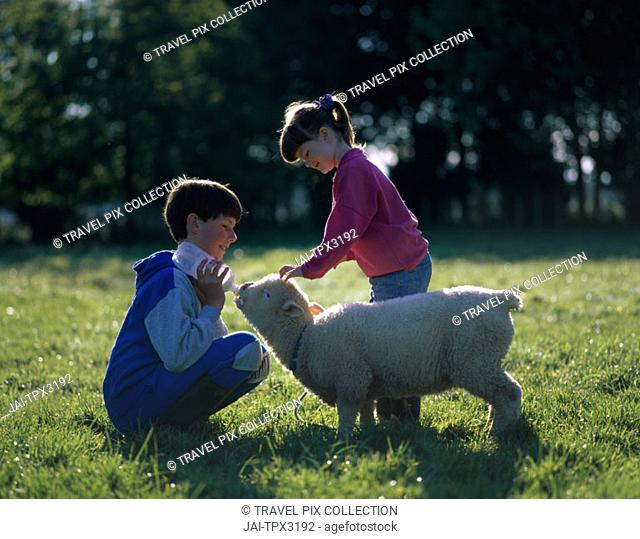 Children / Young Girl and Boy Feeding Pet Lamb, Palmerston North, North Island, New Zealand