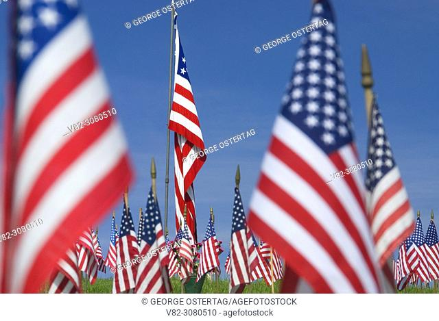 Memorial Day flags on graves, Willamette National Cemetery, Portland, Oregon