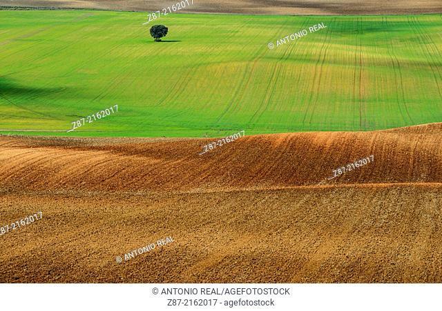 Fields, Alconchel de la Estrella, Cuenca province, Castilla-La Mancha, Spain