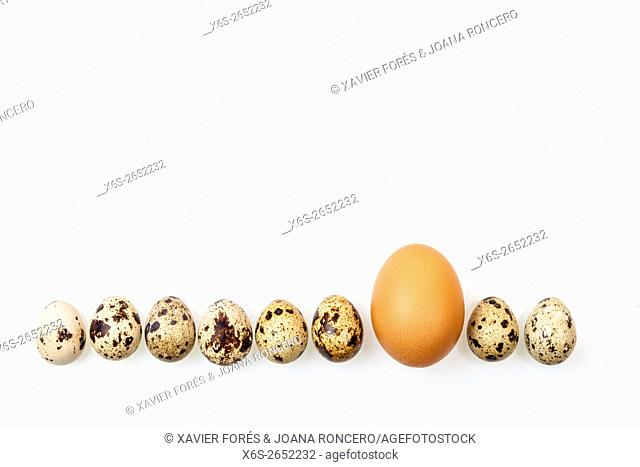 Differentiation / Eggs and Quail eggs