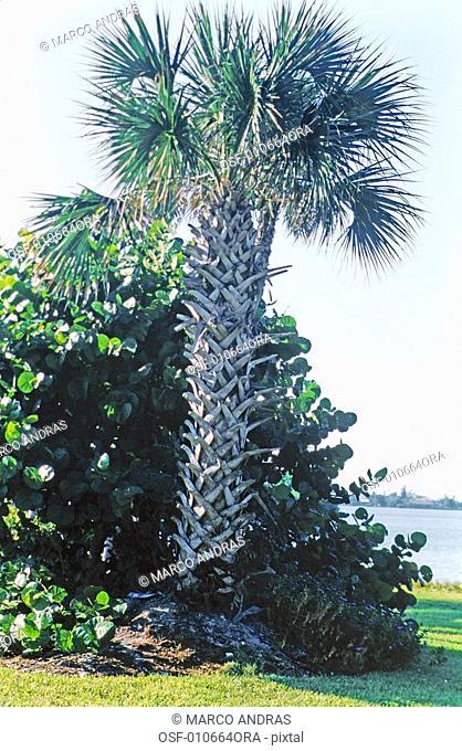 cancun mexico one pine tree vegetation