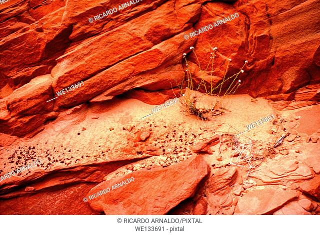 Red Sandstone of Zion National Park in Utah