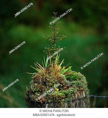 Weathered, fence, old, grows over, plants, moss, little tree, detail