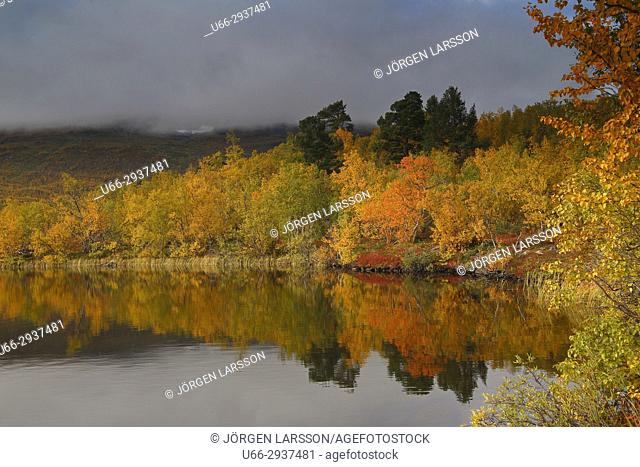 Autumn colours in Abisko national park. Lappland, Sweden