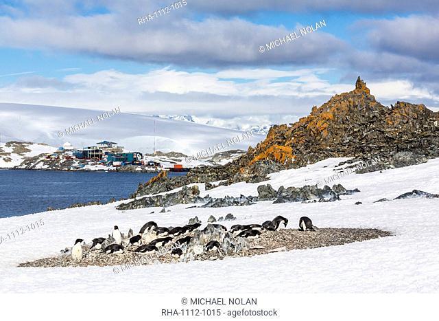 Adelie penguins (Pygoscelis adeliae), Torgersen Island, Antarctic Peninsula, Antarctica, Polar Regions