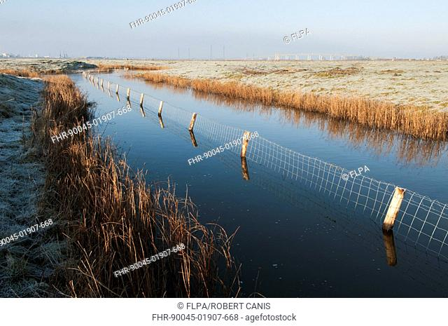 Predator control fence on reserve, Elmley Marshes N.N.R., North Kent Marshes, Isle of Sheppey, Kent, England, March