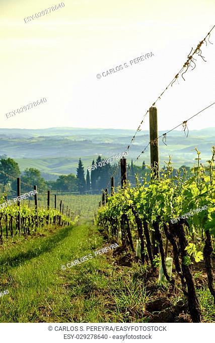 Landscape around Montalcino Tuscany Italy