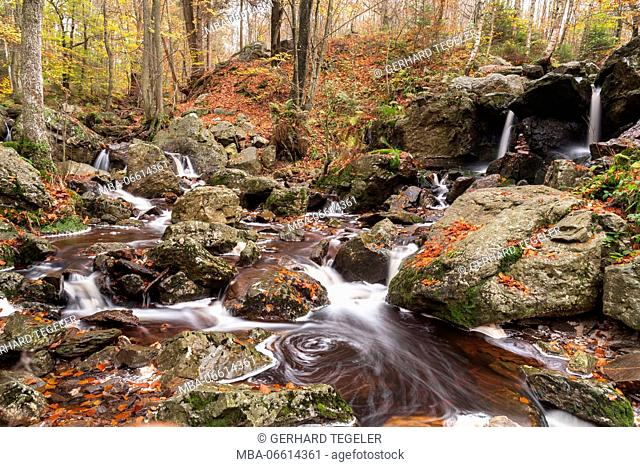 Autumnal scene with stream course in Val de la Statte, Belgium