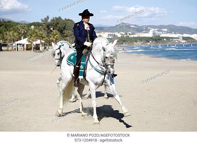 Riders Horse of the Real Escuela Andaluz del Arte Ecuestre of Jerez de la Frontera in an exhibition in Marbella beach, Andalucía, Spain