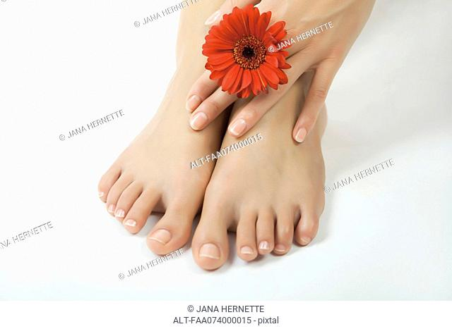 Woman holding gerbera daisy against bare feet