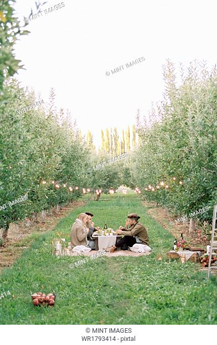 An apple orchard in Utah. Group of people having a picnic on the grass
