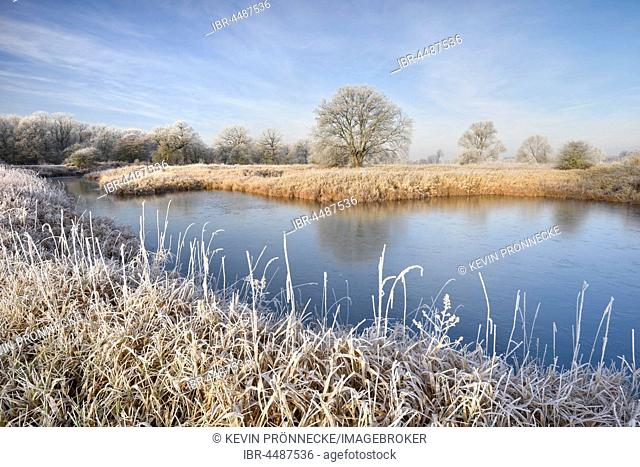 Frozen lake in the Elbe floodplain, landscape with hoarfrost, Middle Elbe Biosphere Reserve, Saxony-Anhalt, Germany