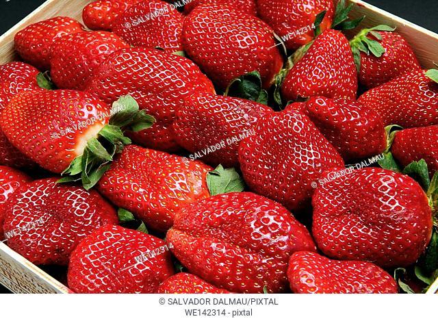 photography studio,creative fruit,strawberry fruit,location girona,catalonia,spain,europe,