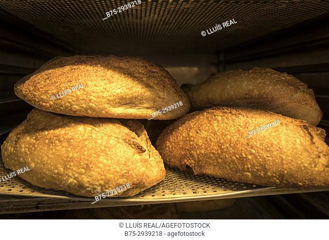 Freshly baked bread. Berlin, Germany