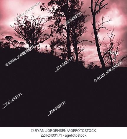 Tree silhouetted landscape of a haunted horror forest with red sky background. Twisted Darkness