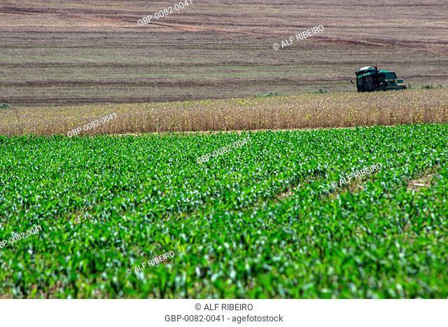 Tillage , corn straw, Bela Vista do Paraíso, Paraná, Brazil