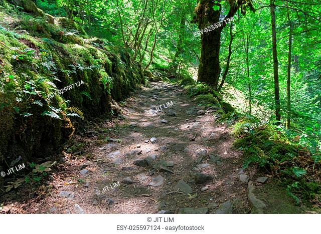 Hiking Trail from John B Yeon Trailhead to Elowah Falls in Columbia River Gorge Oregon