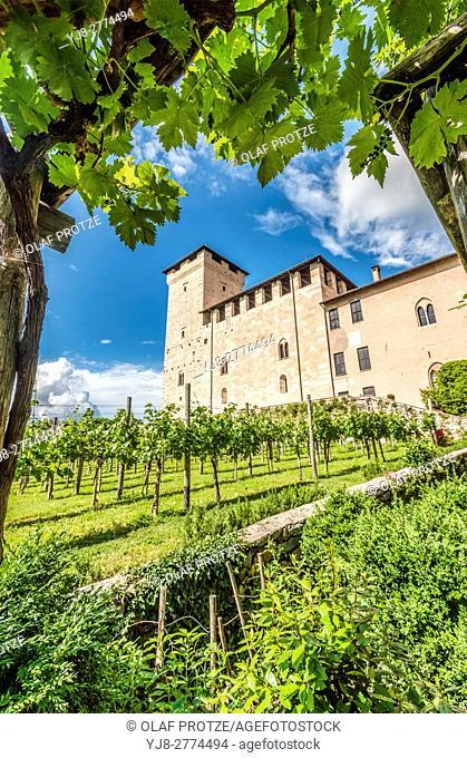 Vineyard at the castle garden inside Rocca di Angera at Lago Maggiore, Varese, Italy