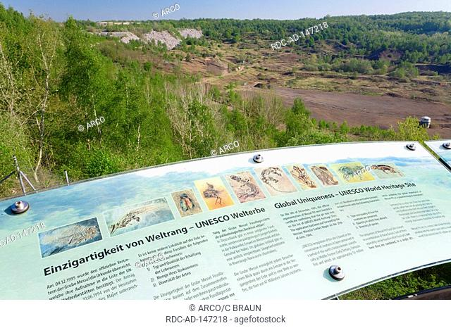 Wall chart of fossils Messel Hessen Germany