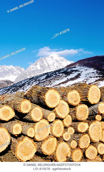 Log stack and snow-covered mountains. San Emiliano, Babia. León province, Castilla-León, Spain