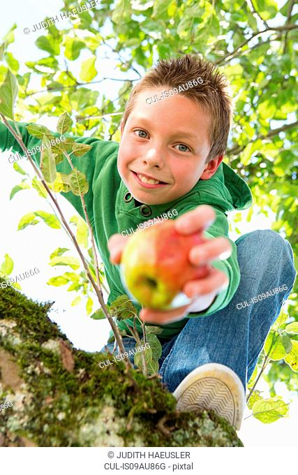 Portrait of boy holding picked apple climbing apple tree
