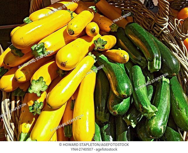 Yellow zucchini, and green zucchini on sale at the Farmer's market on Copley Square. Boston, Massachusetts. Cucurbita is a genus of herbaceous vines in the...