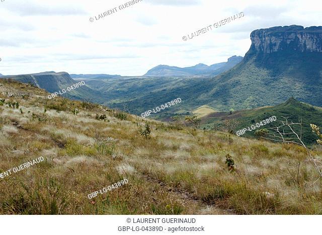 Forest, Landscape, Vale do Paty, Chapada Diamantina, Bahia, Brazil