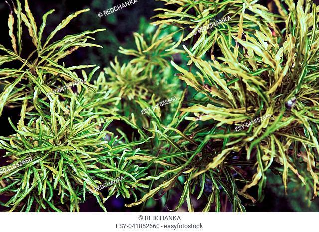 Green leaf texture. Leaf texture background for wallpaper or design