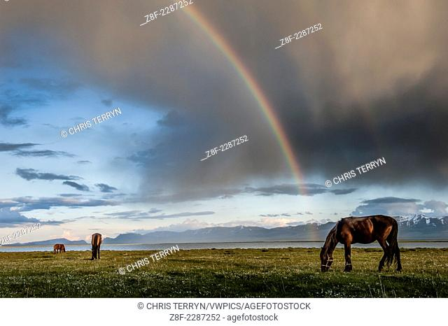 Kyrgyz horses are grazing near the Song Köl lake with rainbow .The weather in Kyrgyzstan is extreme and varied ranging from dry continental to polar in the high...