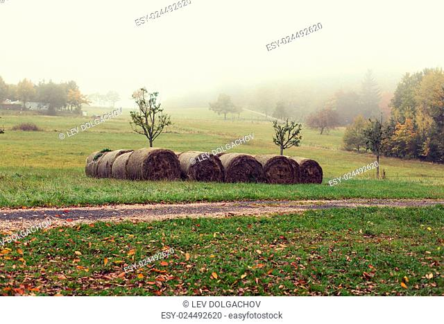 agriculture, harvesting, farming, season and nature concept - haystacks or hay rolls on summer field