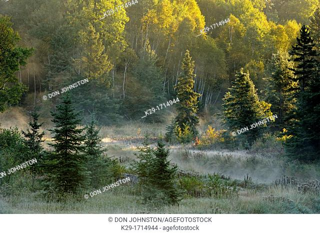 Morning fog on Junction Creek, Greater Sudbury Lively, Ontario, Canada