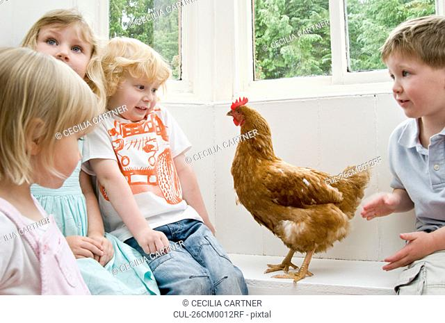 Children playing with a chicken